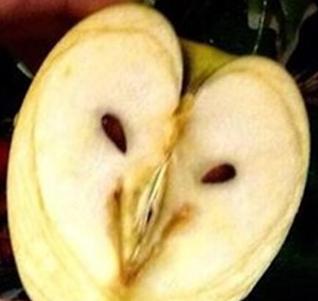 uil-appel